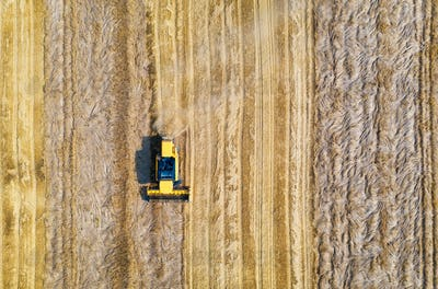 Aerial view of combine harvester is harvesting wheat in summer