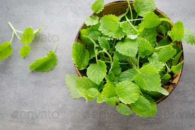 Fresh raw mint leaves on gray background.