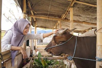 muslim female farmer feeding animal
