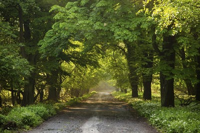 Sunbeams fall onto a sheltered forest road