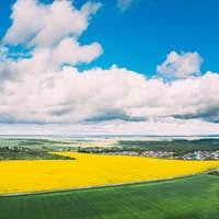 Aerial View Of Agricultural Landscape With Flowering Blooming Rapeseed, Oilseed In Field Meadow In