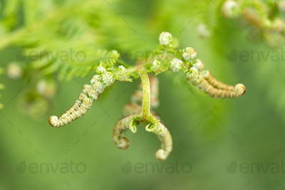 Green close up background of fern