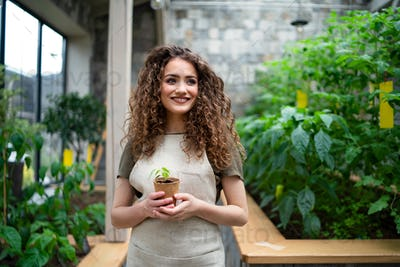 Woman gardener standing in greenhouse, holding small plant
