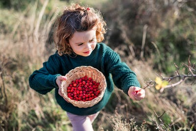 Small girl on a walk in nature, collecting rosehip fruit