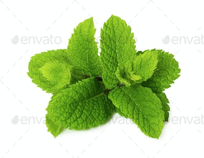 Fresh peppermint isolated on white background.