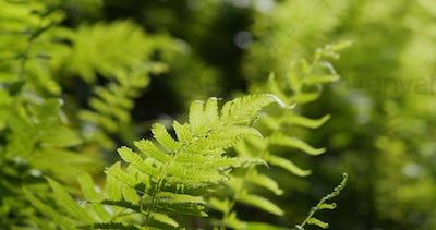 Green ferns plant in field