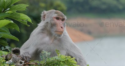 Wild monkey in the forest