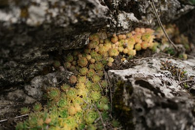 Succulent plants on gray rock background