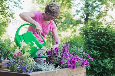 gardener florist plants flowers in wooden container pot