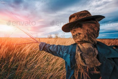 Scary scarecrow in a wheat field at sunset