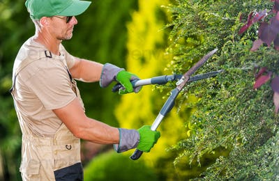 Gardener Trimming Bushes With Hedge Shears.