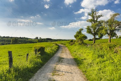 Meadow And Road Near Aachen, Germany