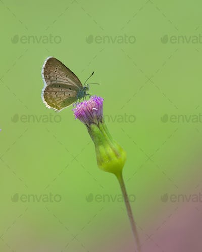 Butterfly Sitting on a Flower. Macro Photo Shoot