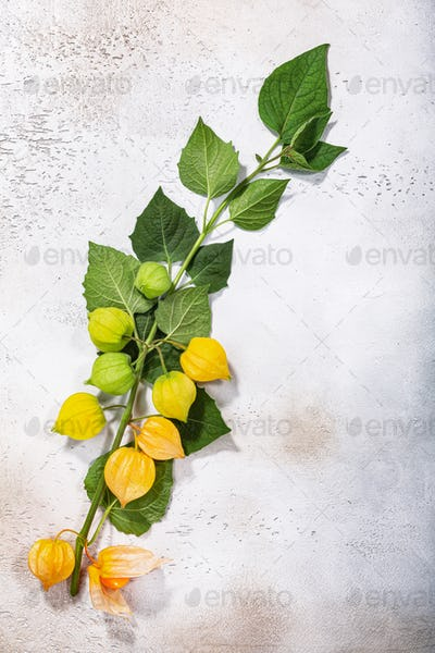 Branch of Physalis (P. peruviana) with fruits on light textured backdrop, top view