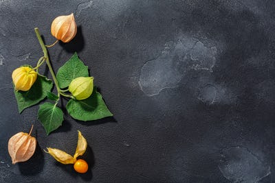 Branch of Physalis (P. peruviana) with fruits on dark textured backdrop with copy space,  top view