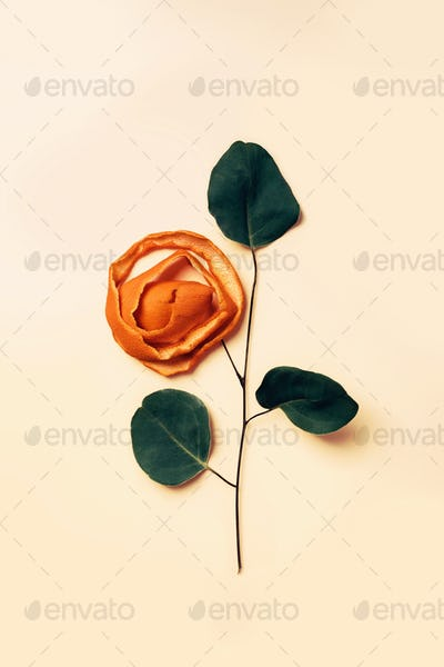 Decorative rose from dry spiral cut of orange peel and plant branch with leaves
