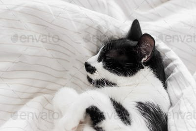 Adorable cat sleeping on bed with stylish sheets in morning light