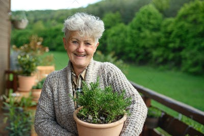 Senior woman gardening in summer, holding potted herb plant