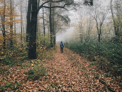 Traveler walking in autumn foggy woods with fall leaves