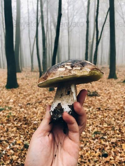 Hand holding boletus edulis mushroom in autumn woods