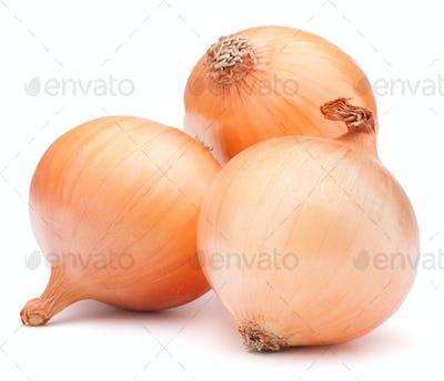 Gold onion vegetable bulbs
