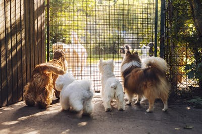 Dogs looking through fence