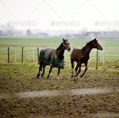 Horses running on field against clear sky