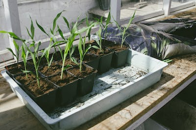 Potted plants growing on window sill