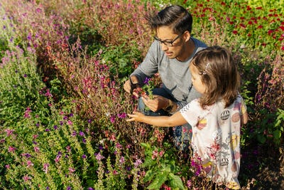Father with daughter (2-3) picking flowers in meadow