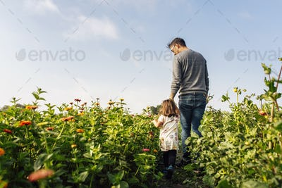 Father with daughter (2-3) walking in meadow