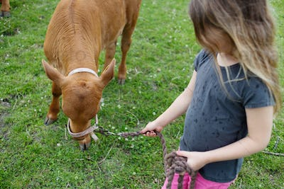 Girl (4-5) standing with calf