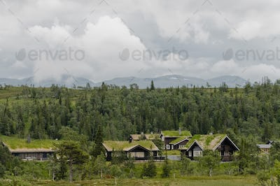 Houses with grass on roofs by forest