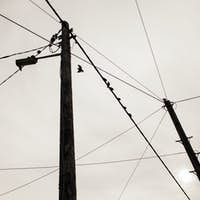 Low angle view of silhouette birds perching on power lines against sky