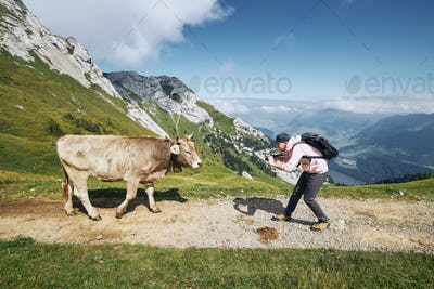 Happy traveler with cow in mountain