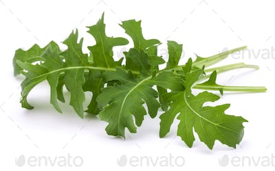 Close up studio shot of green fresh rucola leaves isolated on white background.