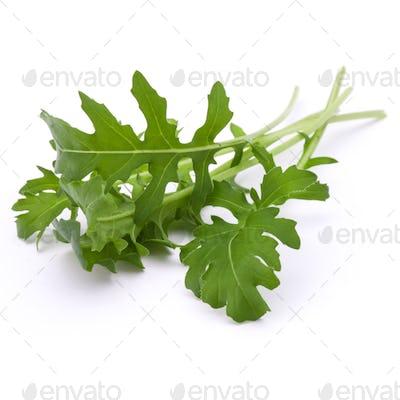 Close up studio shot of green fresh rucola leaves isolated on white. Rocket salad or arugula.
