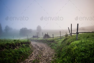 Mesmerizing mystical landscape of a forest covered in thick fog