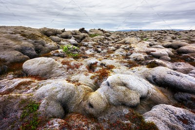 Lava field covered with green moss