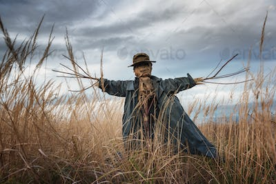 The scarecrow in the wheat field