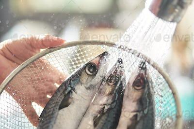 Clean the raw chub mackerel in a wire mesh basket