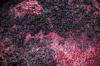 Fermentation of grape must, winemaking concept. Top view