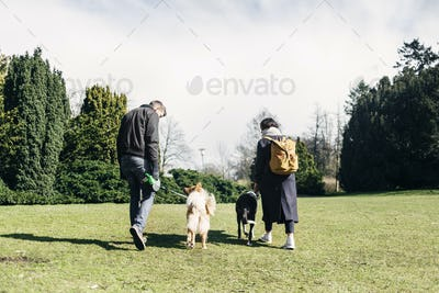 Rear view of young couple walking with dogs at park