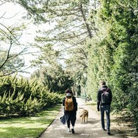 Rear view of young couple walking with Eurasier on footpath at park