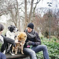 Young couple with dogs relaxing on bench at park