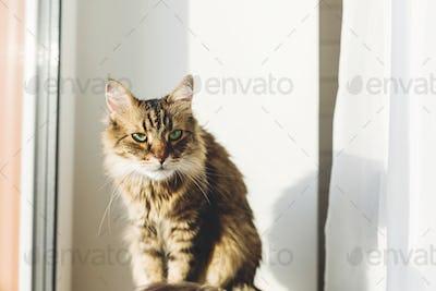 Cute tabby cat sitting on window sill in warm sunny light among green plants