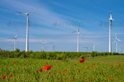 Wind energy turbines and poppy flowers