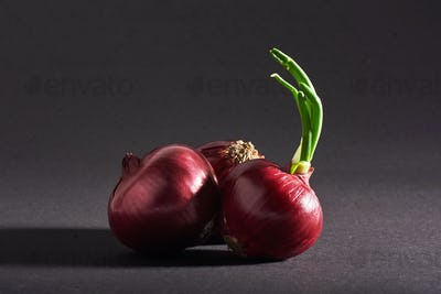 Red onions whole, isolated on a black background.