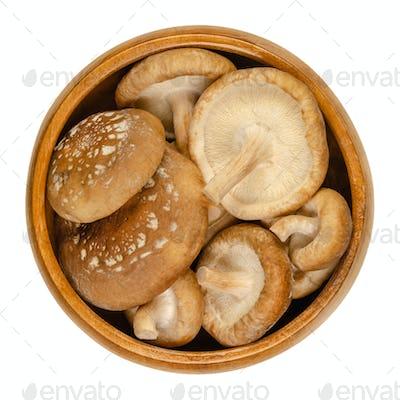 Fresh shiitake mushrooms, Lentinula edodes, in a wooden bowl