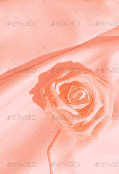 Minimal monochrome pink aesthetic. Silk fabric and roses. Background texture concept