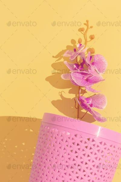 Orchid flowers aestchetic. Minimal still life design trend